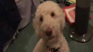 Amanda Lee - Dog Gymnastics/obedience Class