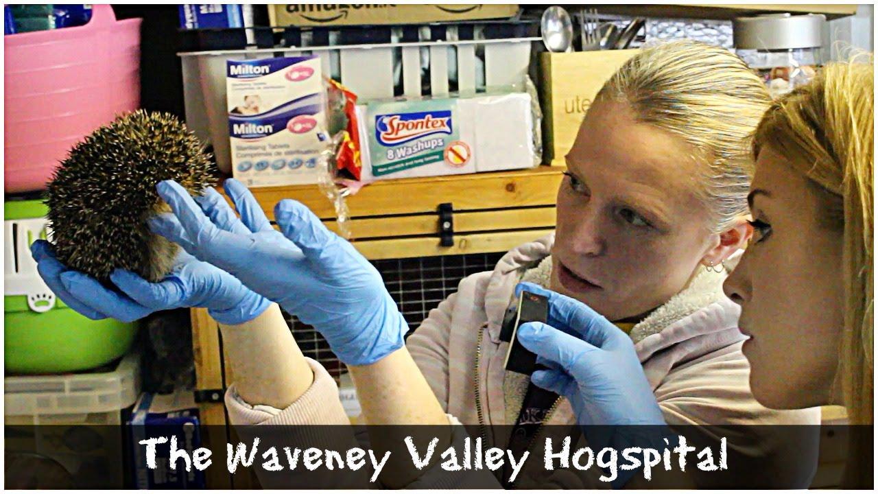 The Hedgehog Hogspital Maddie Moate