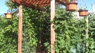 My Redwood Entry Trellis Arbor.  Why not to use vinyl fencing.