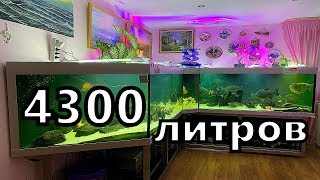 Большой аквариум дома. Просто огромный. Огромные рыбы