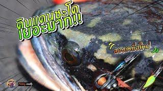 เจอแล้ว!!( ดินแดนปลาชะโด โครตเยอะ ) | ปลาชะโดใหญ่ๆทั้งนั้น | fishing giant snakehead