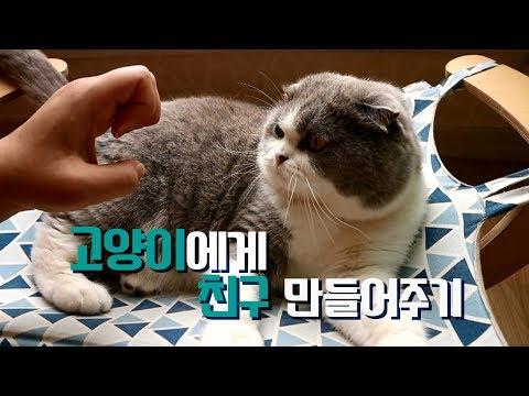 고양이에게 친구 만들어주기!!