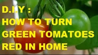 HOW TO TURN GREEN TOMATOES RED IN HOME