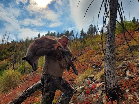 Wolf Hunting- 2019 Idaho- HOWLING A PACK OF 13 WOLVES INTO 30 YARDS