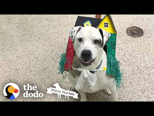 Dog Stuck In Shelter Over 1,000 Days Cant Stop Kissing His Family | The Dodo Pittie Nation