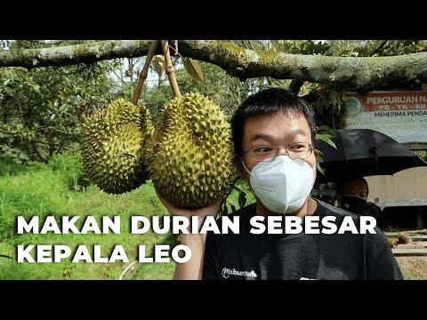 Durian Bintan Ini Gak Kalah sama Musang King!