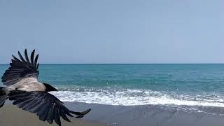 Deniz Manzarası ve Dalga Sesi ile Harika Bir Huzur Molası (30 Dakika Full HD ve 100 Doğal)