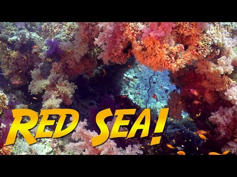 Red Sea Diving Adventure! | JONATHAN BIRD'S BLUE WORLD