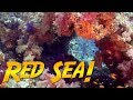 Red Sea Diving Adventure JONATHAN BIRD 39 S BLUE WORLD mp3