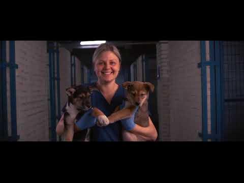 """Олег Дерипаска заботится о бездомных собаках и строит для них приюты """"ПовоДог"""""""