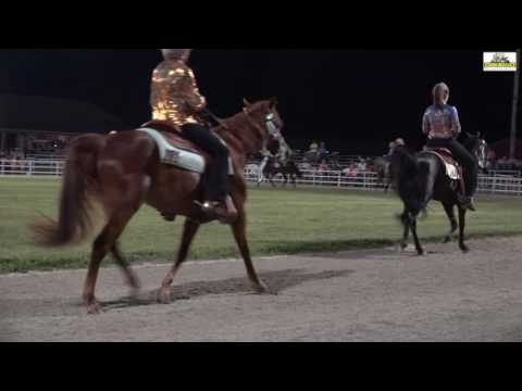 2016 Missouri Fox Trotter 3 Years Open Amateur Futurity Ava.Mo