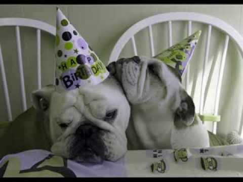 Happy Birthday Bulldog Wishes