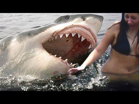 Shark Attack In Jersey Shore | Unbelievable Shark Attack Stories | Killer Shark Attacks