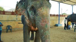 Video Baby Elephant Video.Hathi video.Elephants Videos. elephant in India.हाथी download MP3, 3GP, MP4, WEBM, AVI, FLV November 2017