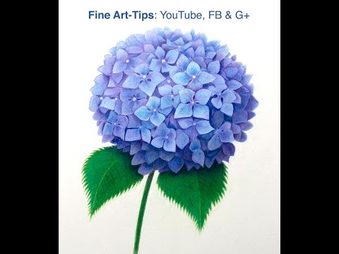 How to draw a hydrangea with color pencils how to draw a purple flower