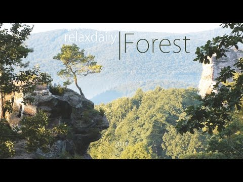 Light Music - relaxing instrumental music - Forest