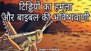 Locust Attack In India And Bible Prophecies | Apocalypse | Angel V Chandra