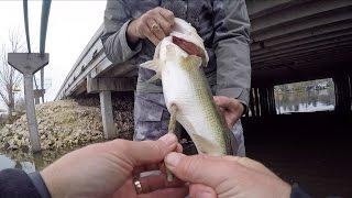 Big Bass Eats & Poops Senko Worms