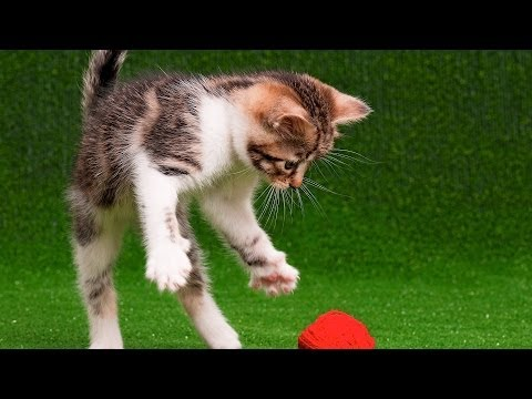 Top 3 Things Cats Like | Cat Care