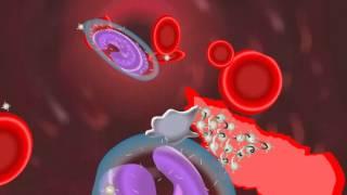 Natural Medicine To Increase Blood Platelet Count | Naattu Maruthuvam – Sun tv Show