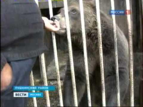 Медведь в автосервисе - Пушкинский район