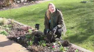 Gardening Tips: How To Divide Perennial Plants