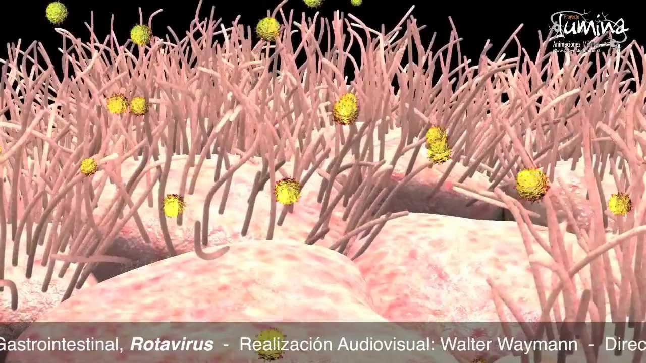 virus gastrointestinal niños