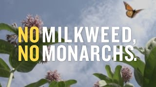 Save Monarchs from Dow's Chemical Assault
