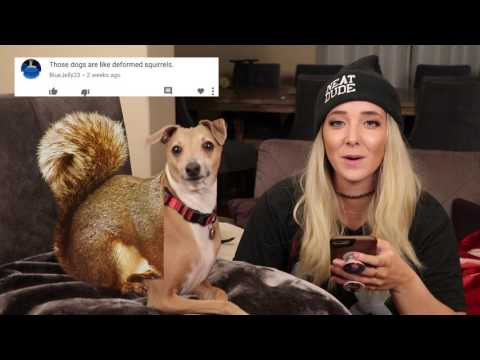 Thumbnail: Reading Mean Comments About My Dogs