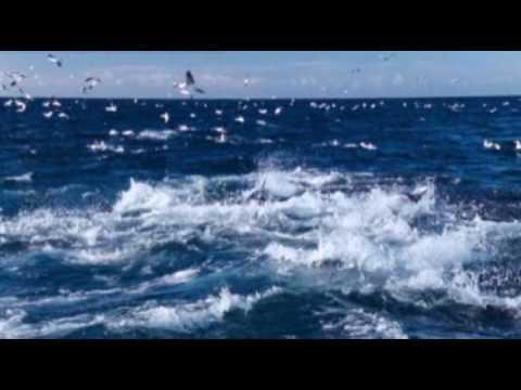 Клип Ennio Morricone - Le vent, le cri
