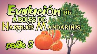 Evolución de los Naranjos Mandarinos , parte 3   almadgata