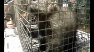 Fisher Cat: Wanting To Get Out