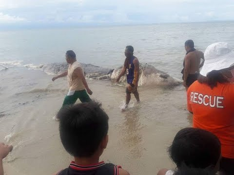 Huge 32ft Sea Creature Washes Up On Beach In The Philippines