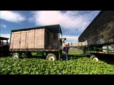 Cal-Organic Farms – Growing Organic Produce with Pride & Int