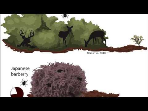 Does multiflora rose invasion increase Lyme disease risk? (April 2016)