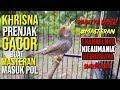 Prenjak Betina Gacor Prenjak Gacor Betina Cocok Buat Masteran Dan Pikat Ngekek(.mp3 .mp4) Mp3 - Mp4 Download