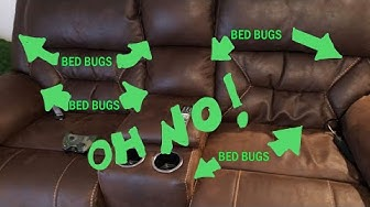 Bed Bugs in my COUCH! | Where to check a couch for BED BUGS | Bed Bug Pro DIY