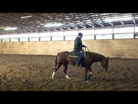 Training Exercise for a Horse that Flips Its Head in the Lead Departure