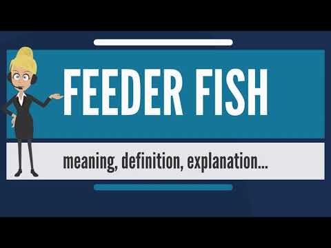 What Is FEEDER FISH? What Does FEEDER FISH Mean? FEEDER FISH Meaning, Definition & Explanation