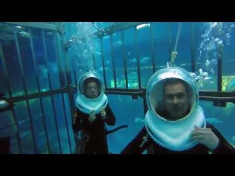 DUBAI shark dive