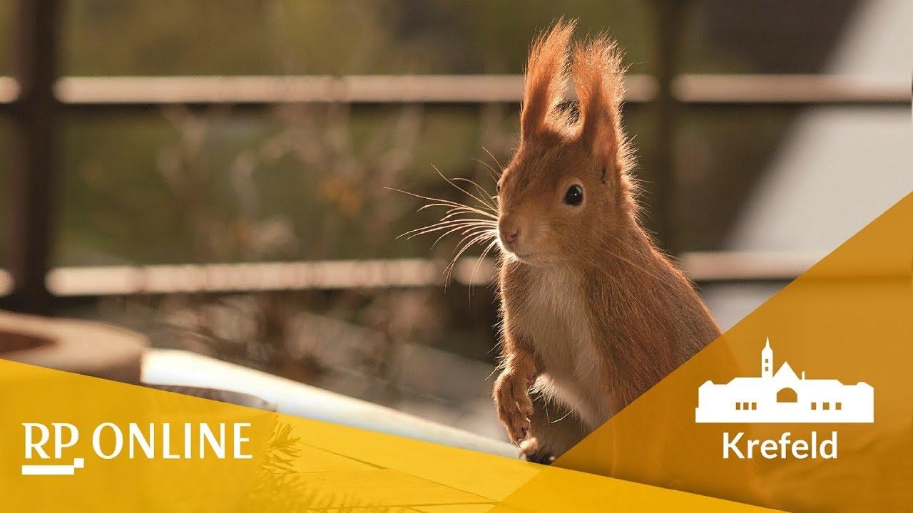 Eichhörnchen-Dating-Website