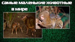 Самые маленькие животные мира | Кругозор