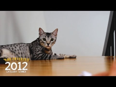 The Friskies 2012 Category Winner (Catchall): 'Kitty Plays Fetch'