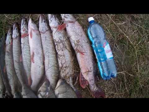 Рыбалка в Омской области. Тюкалинск- р.Оша.