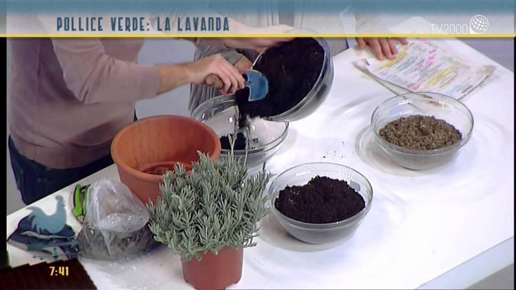 Bromelia cura - Piante appartamento - Bromelia cura ...