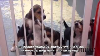 Щенки и котята страдают от опытов в животной лаборатории