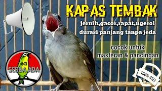 Download Masteran Suara Burung Kapas Tembak Gacor Pilihan Juri Senasional Durasi Panjang #kapastembak