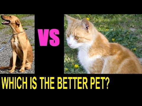 the better pet John hawkins cats and dogs my god, do we even have to compare the two obviously, dogs are better everyone knows that let's go over the reasons why cat owner's.