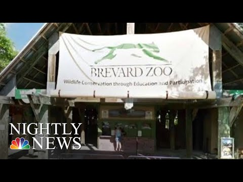 Florida Front Row - Toddler Falls Into Rhino Exhibit At Florida Zoo