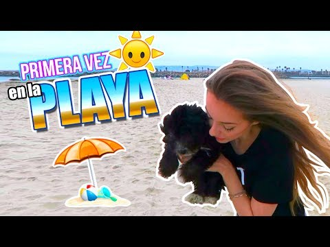 UN HERMANITO PARA CACHITO?! + PRIMER DÍA EN LA PLAYA! 11 Jun 2017